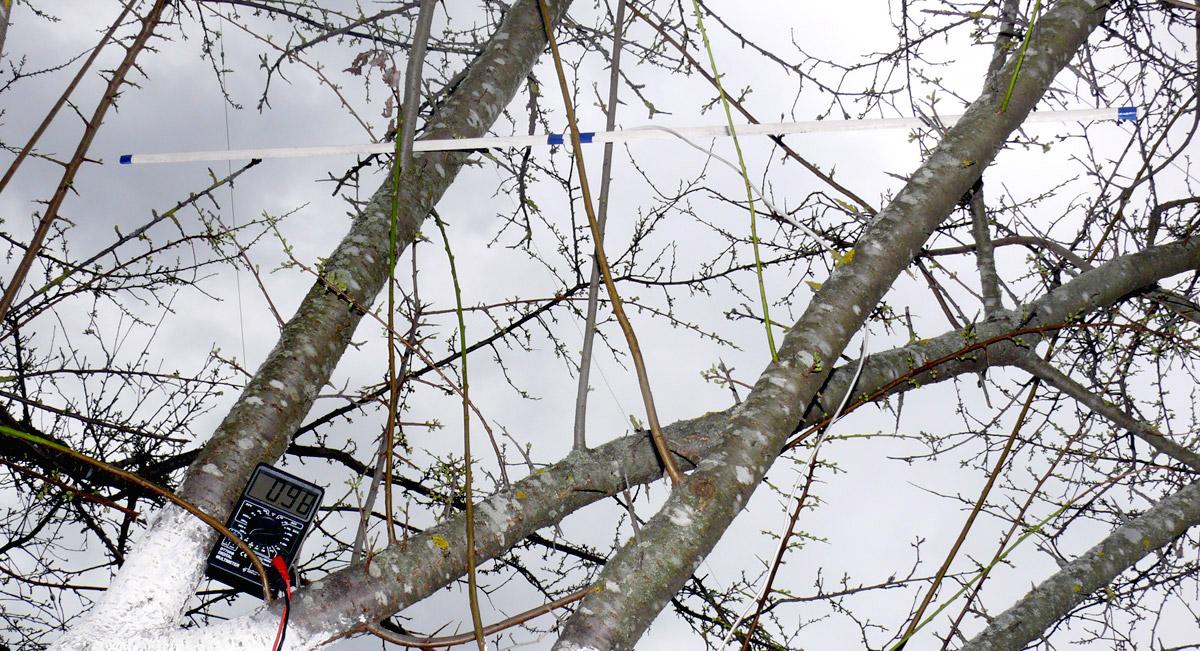 tree position3